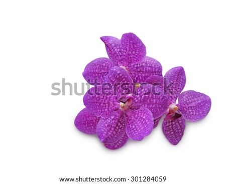 Purple orchid (Vanda coerulea) on white background  - stock photo
