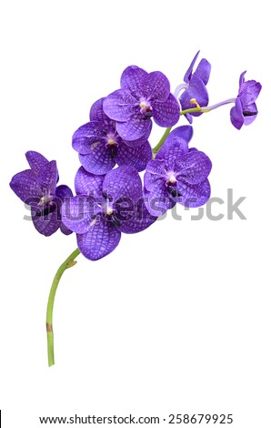 purple orchid vanda isolated on white background - stock photo