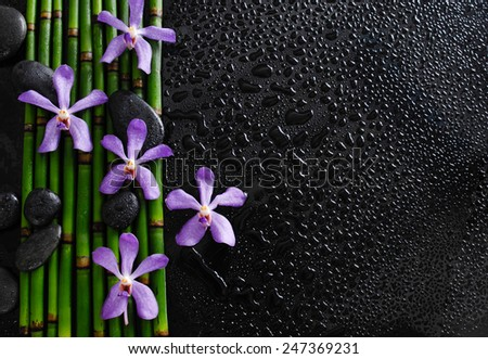 purple orchid with bamboo grove on wet  - stock photo
