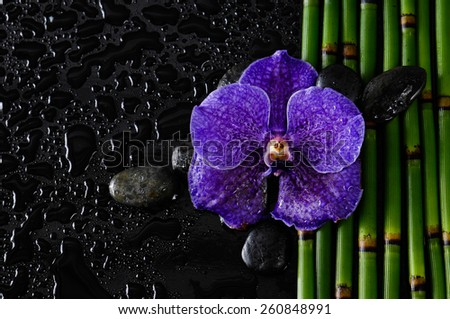 Purple orchid with stones on bamboo grove on wet background - stock photo
