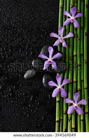purple orchid with stones on bamboo grove-wet background  - stock photo