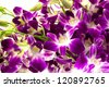 Purple orchids bouquet on white background. - stock photo