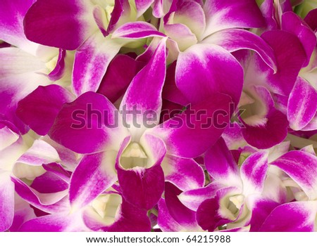 Purple orchids close-up. - stock photo