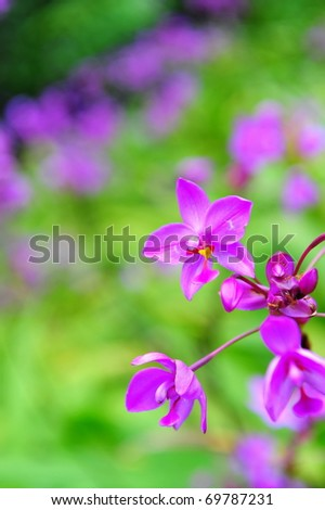 Purple orchids in a garden
