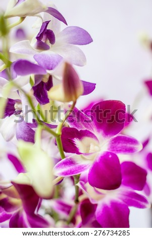 Purple orchids isolated