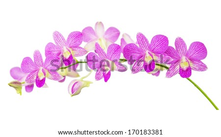 Purple orchids isolated on white background