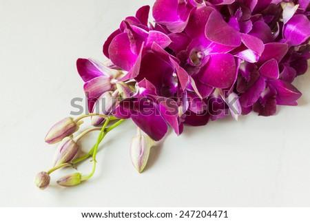 purple orchids on stone tile - stock photo