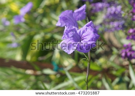 stock-photo-purple-petunia-473201887.jpg