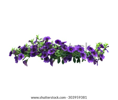 Purple petunia flowers in a string for design element isolated on white.