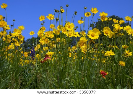 purple red and yellow flowers in an open field
