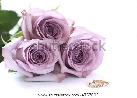 Purple roses and wedding rings - stock photo