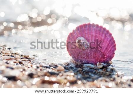 Purple sea shell on the beach - stock photo