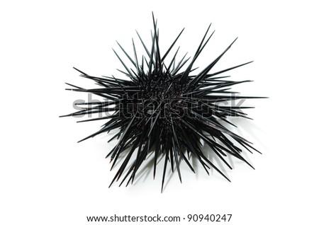 purple sea urchin - stock photo