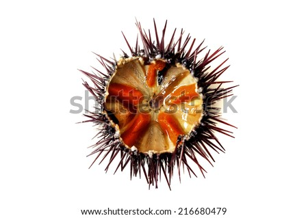 Purple sea urchin roe on a white background - stock photo