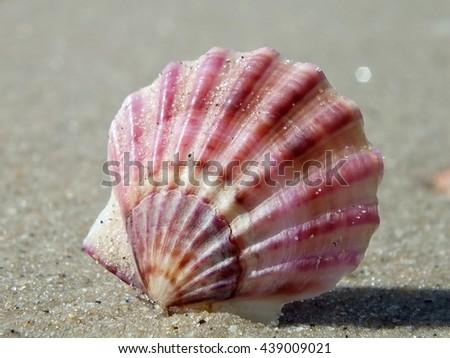 Purple shell of sea scallop on sand - stock photo