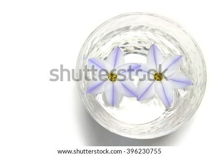purple spring star flower in glass of water - stock photo
