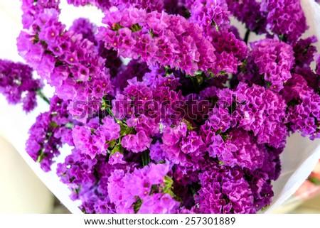 Purple statice flower, Limonium. Statice symbolizes remembrance. - stock photo
