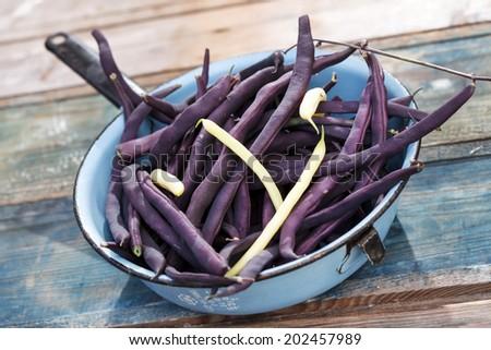 Purple string beans - stock photo