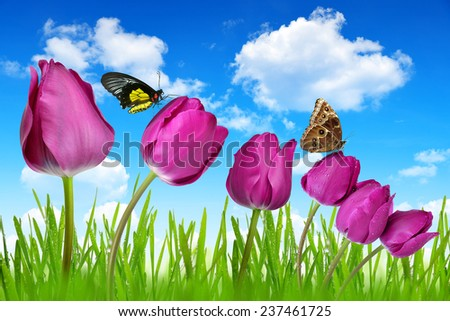 Purple tulips with dewy green grass and butterflies on blue sky