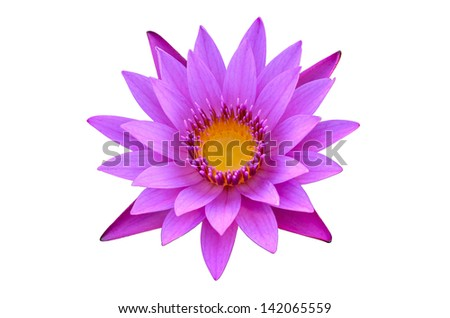 Purple Water Lily - stock photo