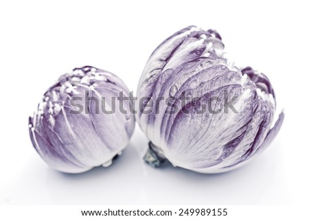 purple water lily flower (lotus) and white background. The lotus flower (water lily) is national flower for India. Lotus flower is a important symbol in Asian culture.fancy color - stock photo