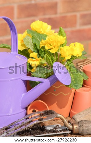 Purple watering can with potted primroses and empty pots - stock photo