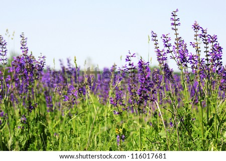purple wild flowers - stock photo