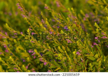 Purple wildflowers background - stock photo