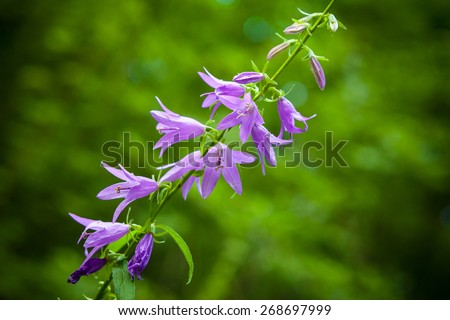 Purple wildflowers, bokeh effect - stock photo
