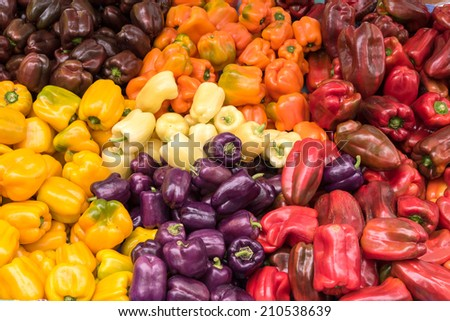 Purple, Yellow, Red, White, Bell, Peppers at Farmers Market, Fresh and Organic - stock photo