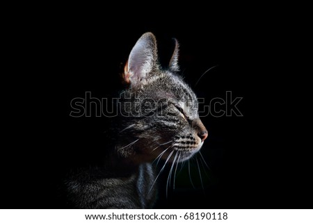 purring cat with closed eyes in the pleasure on black background - stock photo