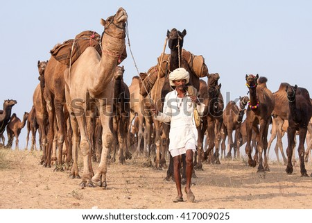 PUSHKAR, INDIA - NOVEMBER 19, 2012 : Indian man and camels in Pushkar Camel Mela (Pushkar Camel Fair) in Pushkar, Rajasthan, India. This fair is the largest camel trading fair in the world - stock photo