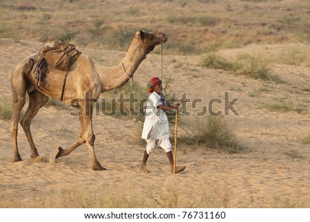 PUSHKAR, INDIA - NOVEMBER 6: Unknown camel herder arrives at the annual Pushkar Camel Fair on November 6, 2008 in Rajasthan, India