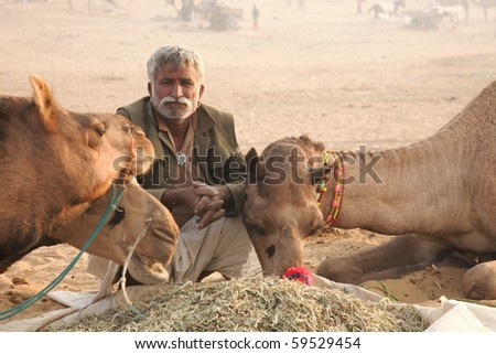 PUSHKAR-NOVEMBER 11: Camel owner feeds his camels in the morning at pushkar fair, November 11, 2008 in Pushkar India. Pushkar fair is a big camel and cattle trading.