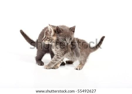 pussy cats - stock photo
