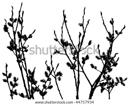 Pussy-Willow Silhouette - stock photo