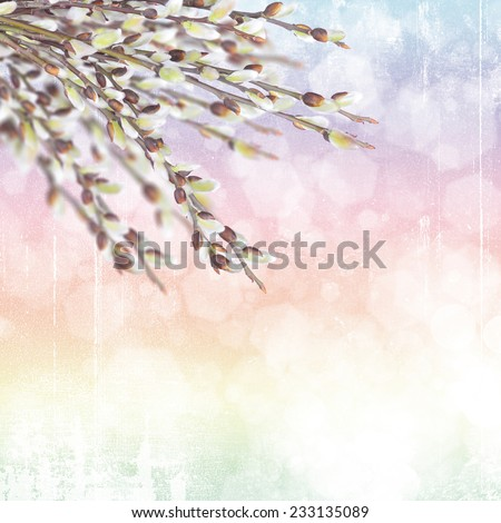 Pussy willow twigs on bokeh background - stock photo
