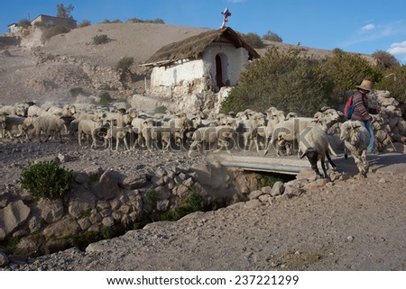PUTRE, CHILE - OCTOBER 14, 2014: A shepherd with a flock of sheep crossing a bridge over a stream in the small town of Putre in northern Chile. - stock photo