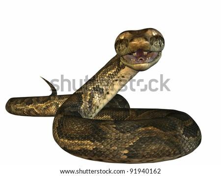 Python - stock photo