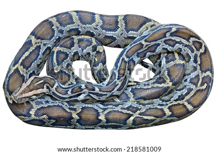 Python isolated on white background. This has clipping path. - stock photo
