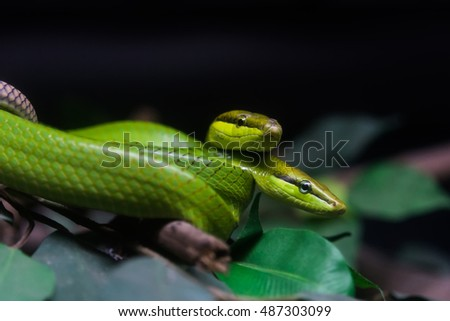 Python on a branch