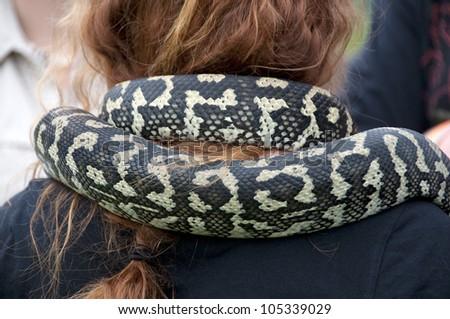 Python snake around a neck - stock photo