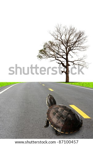 Qingdao travel.Abstract commitment to the turtles. - stock photo