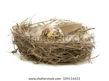 quail egg and feather the nest isolated on a white background close-up - stock photo