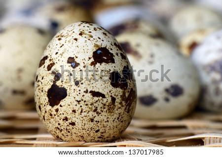Quail eggs. - stock photo