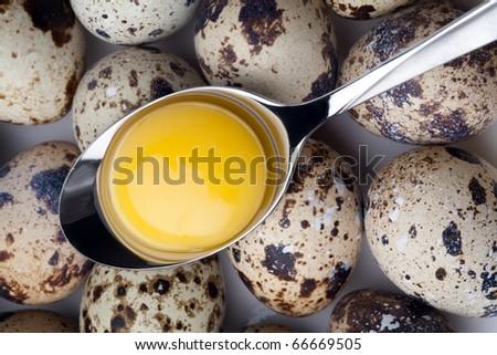 Quail eggs close-up on light background. - stock photo