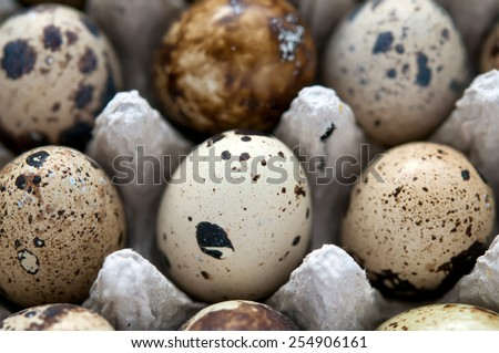Quail eggs full frame, macro and close-up - stock photo