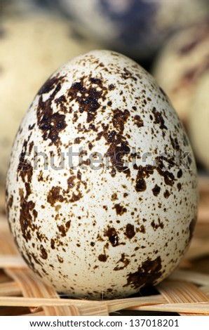 Quail eggs; high protein and cholesterol diets. - stock photo