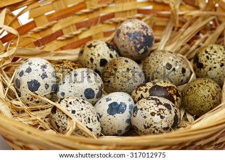 quail eggs in nest. Closeup - stock photo