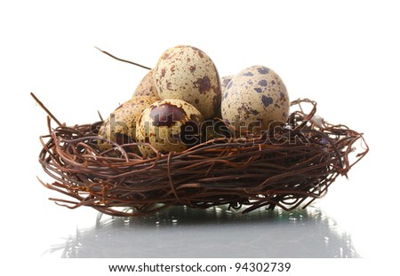 quail eggs in nest isolated on white - stock photo